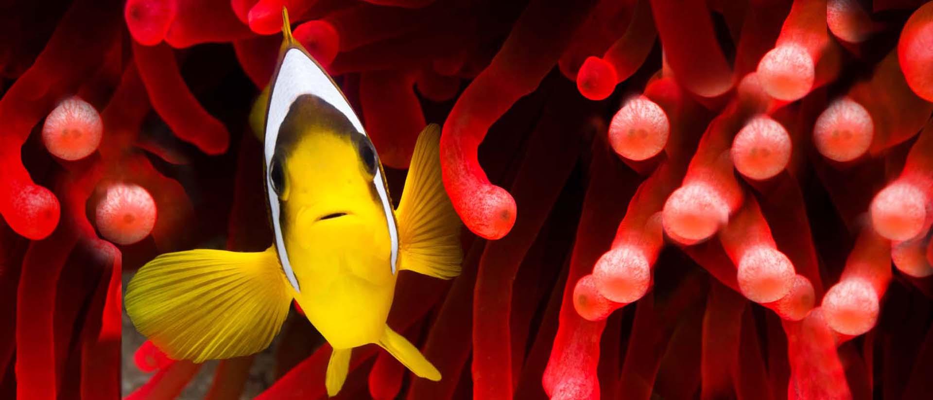 GHL Doser. Alles was Fisch zum Leben braucht.