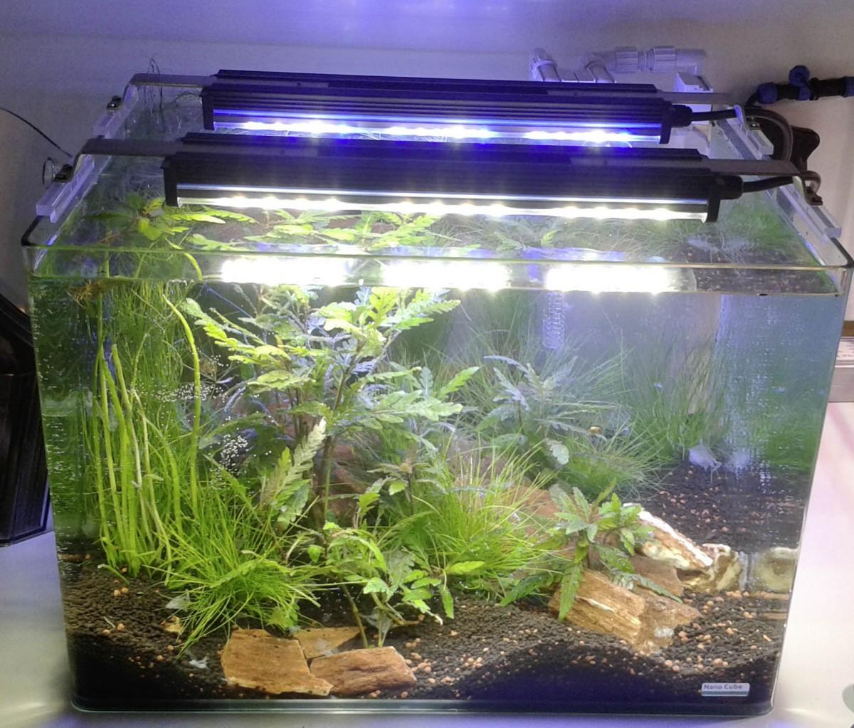 www.coralshop-burkart.de - GHL Mitras Lightbar 2 Daylight 40 - 160