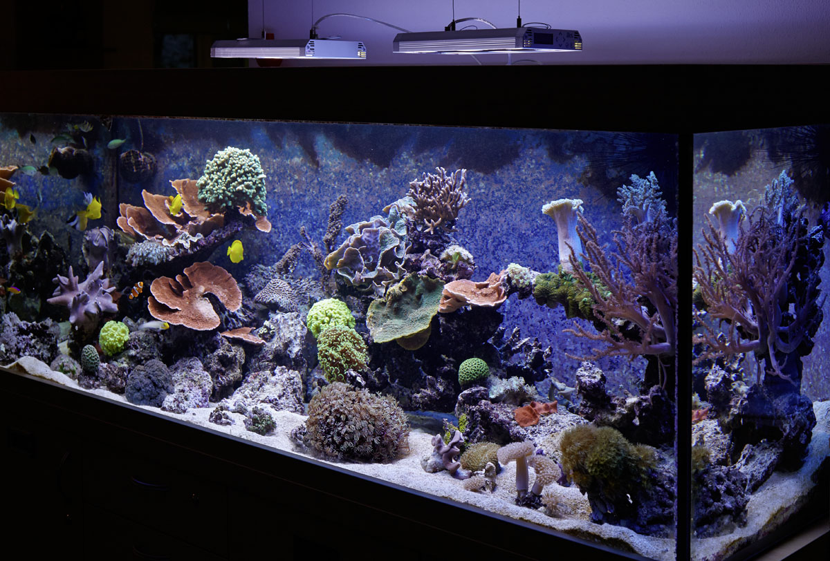 Meerwasser Aquarium mit GHL Technik