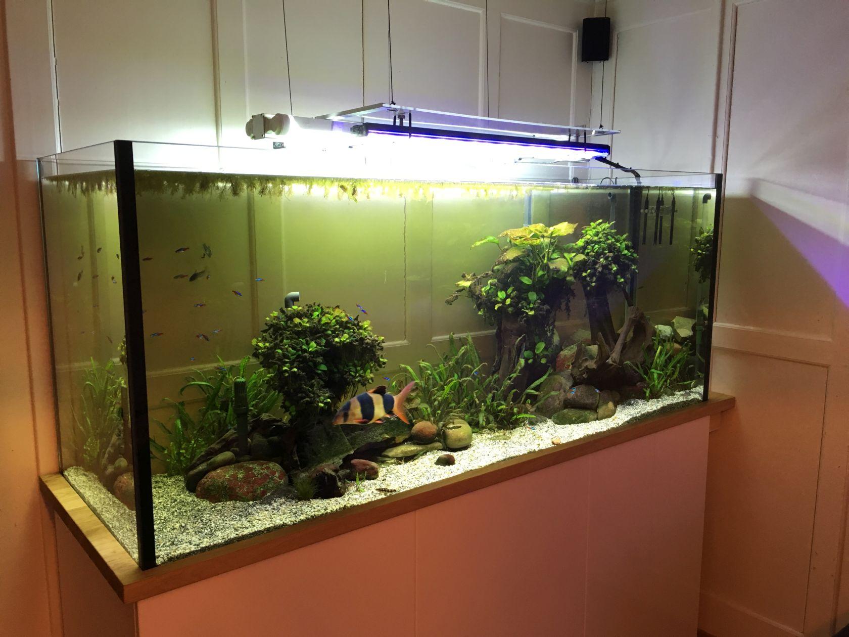 Fische & Aquarien Aquarien Aquarium Seien Sie Im Design Neu