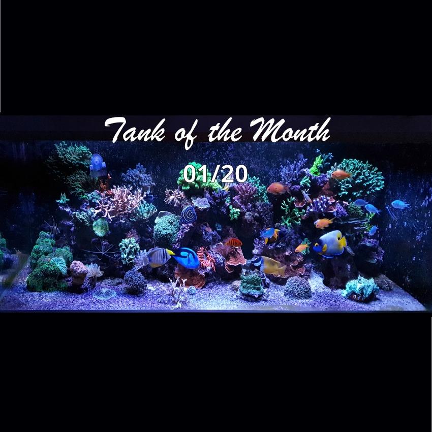 TOTM_01_20, Aquarium von Ole Ovesen