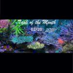 TOTM_02_20, Aquarium von Anthony Pham