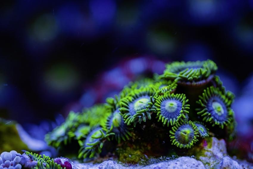 Coral_1_TOTM_03_20