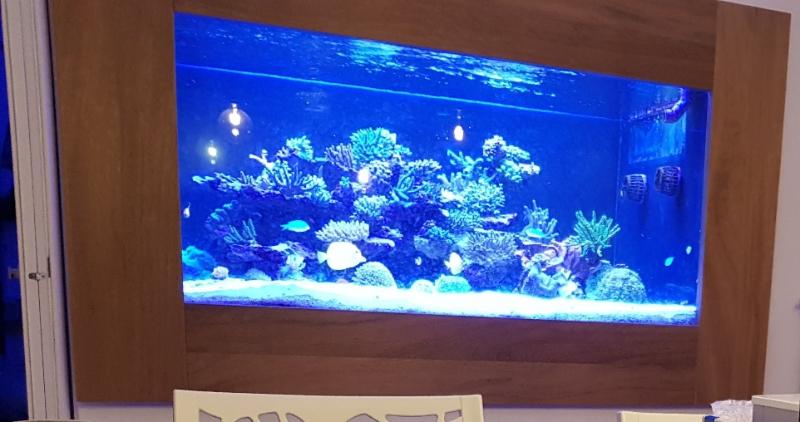 TOTM_Mai_2020_In die Wand eingebautes Riff Aquarium