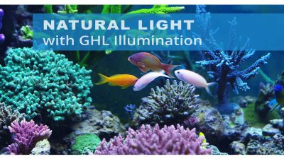 Permalink to:GHL Illumination