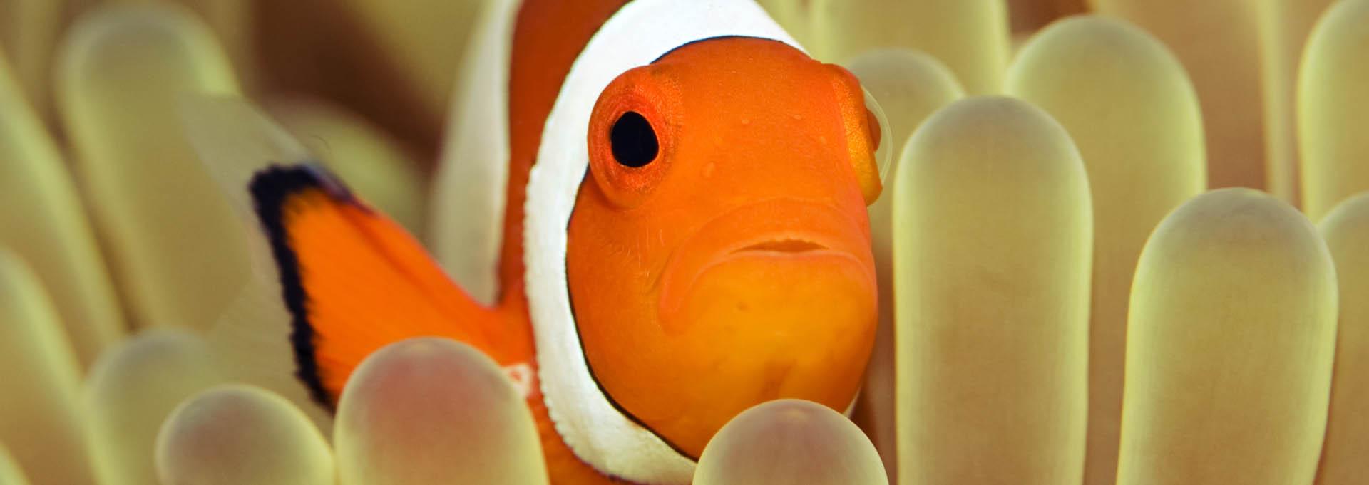 Clownfish_Banner_1920x6811