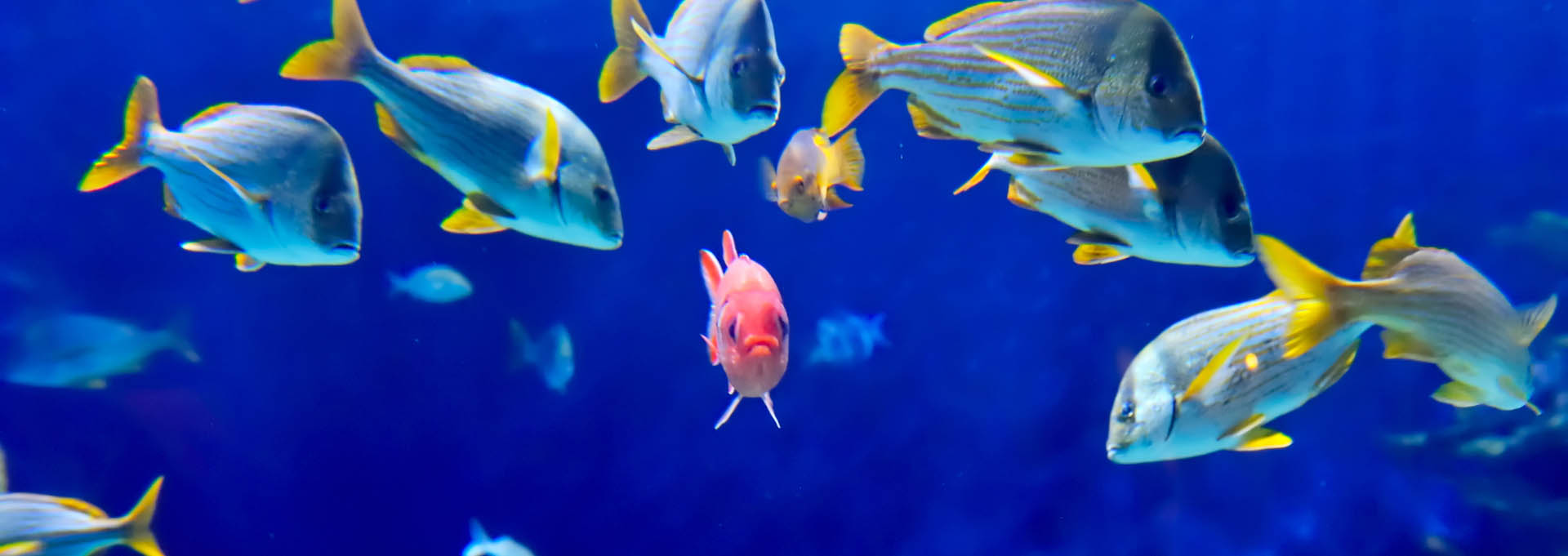 underwater-image-of-tropical-fishes_Banner