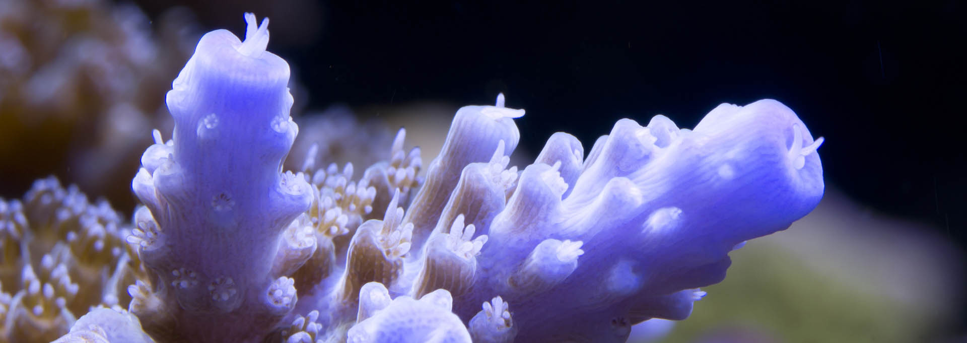 Pink-coral_Bannerbild_1920x681