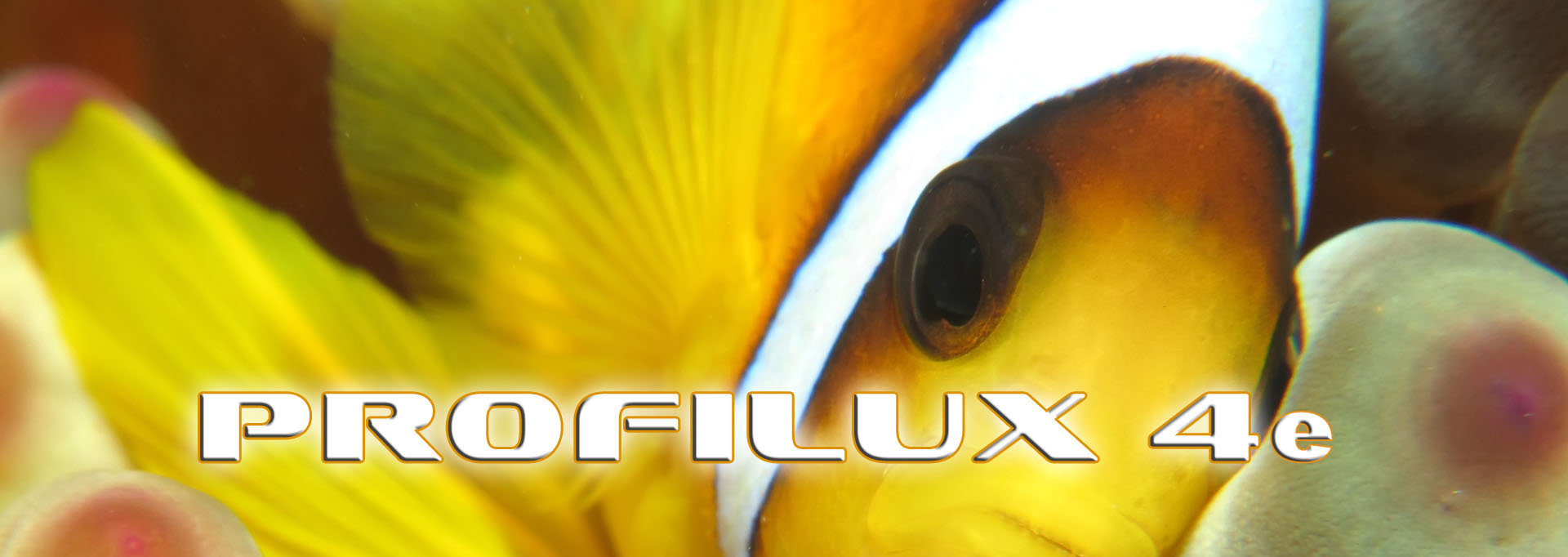 Korallen_Banner_4e_1920x681