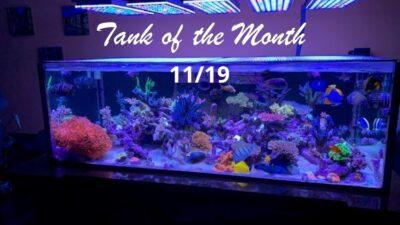 Beitragsbild TOTM November19, Michael Shur