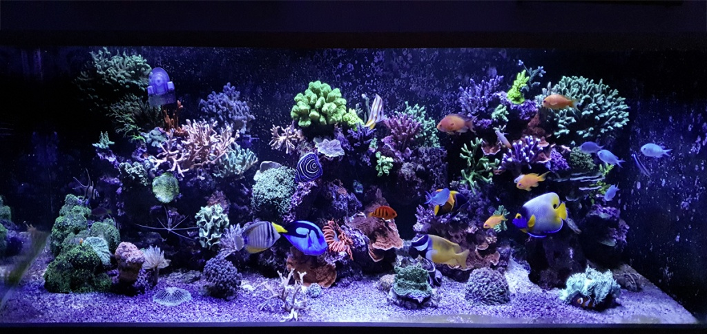 TOTM 01_20_Aquarium_Front