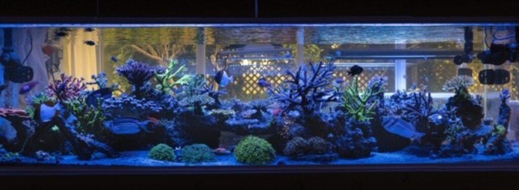 TOTM 02_20_Aquarium_Front