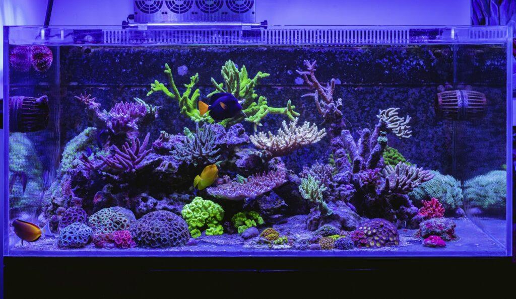 Aquarium_Front_TOTM_03_20