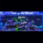 TOTM_03_20, Pedro Gomez' Island Reef