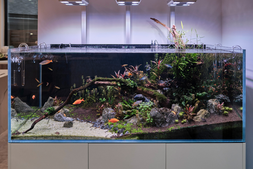 TOTM_04_20_Planted Tank_Final