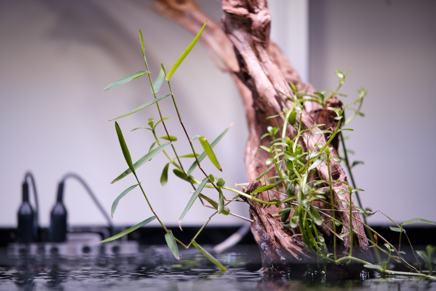TOTM_04_20_Planted Tank_Probes