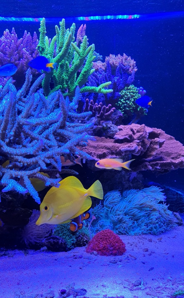 TOTM_05_20_Saltwater Aquarium